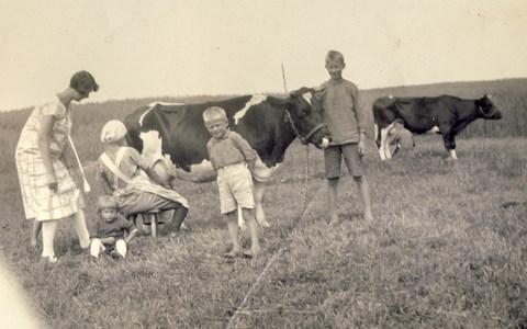 Mjölkning i hagen Askome 530 Yttregård.