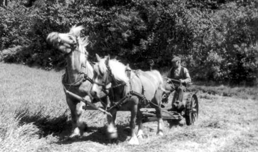 Birger Andersson, Lågastorp, Tallbacken, Askome, skördar med slåttermaskin
