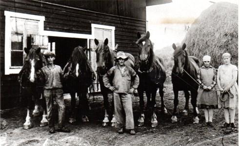 Prästgårdens hästar