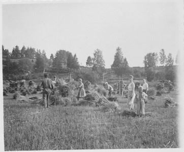 Skördetid 1944 vid Broby mellangård