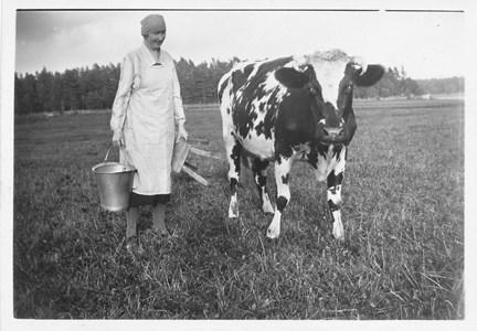 Handmjölkning vid Tysktorp