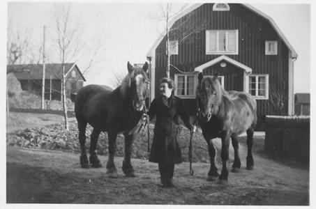 Hästar vid Nya Bredgården