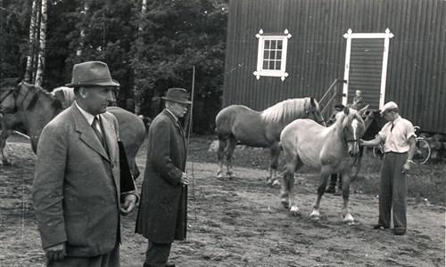 Hästpremiering vid Väderbrunn