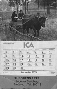 Almanackan 1975, Theoréns eft. Ingemar Sandberg. På bilden Wilhelm Karlsson, Eskilstorp med oxen Laban.