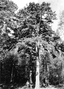 12-01-00-Kallviken-Penningtallen-01.jpg
