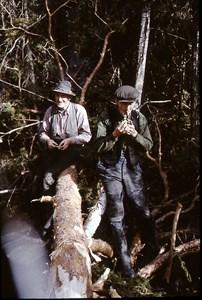 Paus i skogsaverkningen.