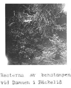 05-010-00-Bäckelid-Benstamp-01.jpg