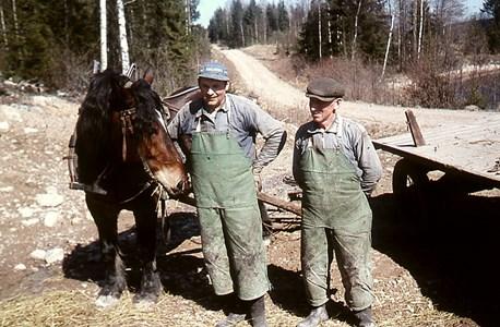 Brunsberg Skogsarbete Agne027.jpg