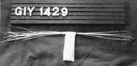 Gi.Y.1429 Svinborst