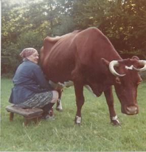 Karin Petersson mjölkar Anna, 18 år