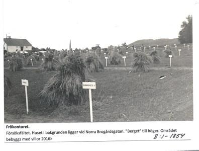 Frökontoret, Försöksfältet 8-1-1854