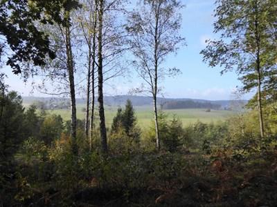 Naturbild vid Södra torpet i Båljen