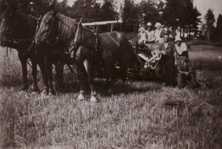 Hällingsfall  Hästar med självbindare