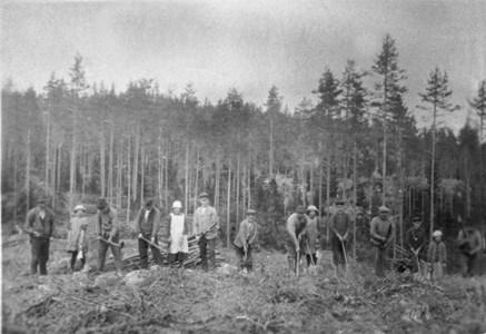 Rumma Skogssådd vid Nedre Rumma.