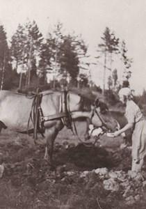 Gärdsnäs Nedre  Törstig häst