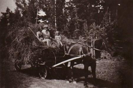 Hölass i Domarvik
