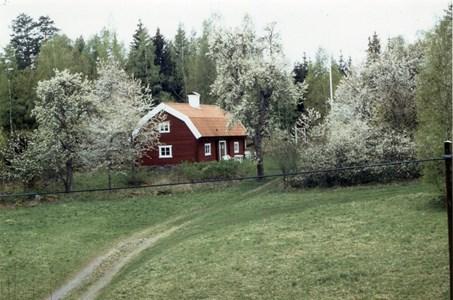Domarvik