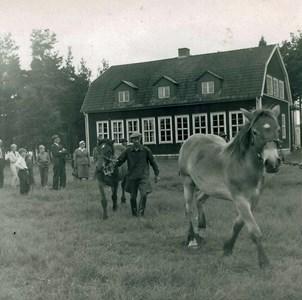 Hästpremiering