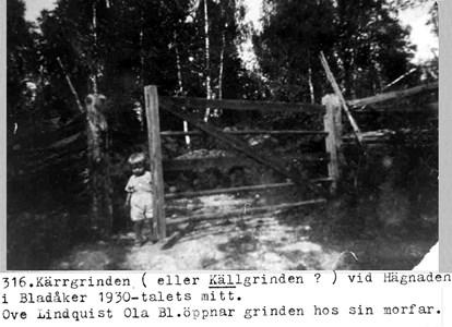 0316 Hägnaden, Bladåker. Ove Lindqvist.jpg
