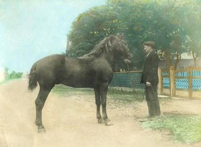 Adrian Olsson med häst