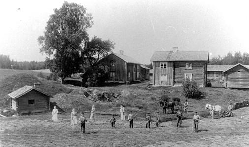 Höbärgning vid gården Karstorp i Hammars församling, omkring år 1908.