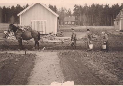 Malexander potatissättning 30 April 1945