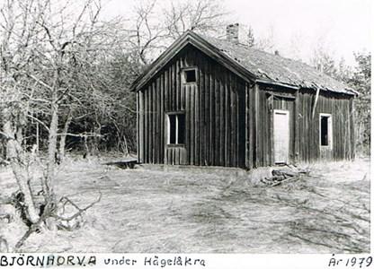 Björnhorva