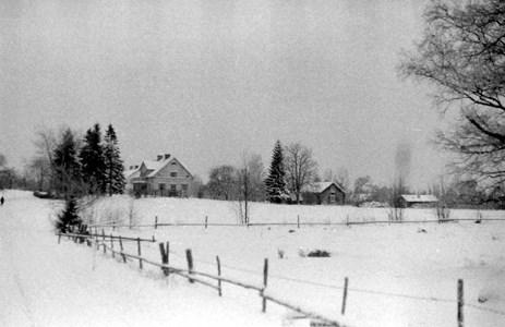 Notåsa i snö