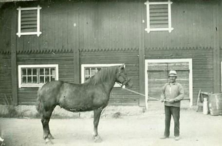 Hästkarl