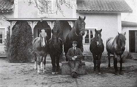 Hästkarlen Ljunggren