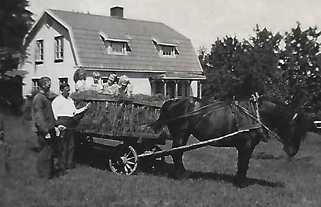 Högaberg, hästen Bojan med barn i skrindan