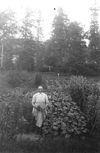 Anna Rosén i trädgårdslandet.