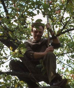 Kalle plockar äpplen i Korbo, Östervåla
