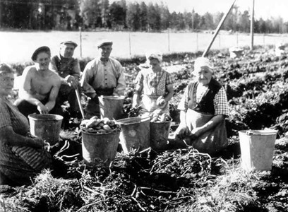 Potatisskörd vid Källmyra 1940-tal.jpg
