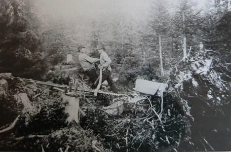 Stubbrytning vid Hållans fäbodar omkring 1915