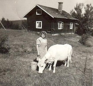 Ingrid Ljudén med ko i Björnarvet.jpg