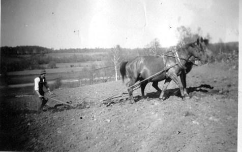 Så här gick det till före traktorns tid. På bilden ser vi den unge lantbrukaren Gösta som övertagit familjegården Anderstorp 1:6. Hästarna kan vara Biam och Pålle, två trotjänare. Åkern var en backig slänt, kallad Hällan. i bakgrunden ser man Rönneå