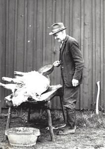 Kalle i Kråkebo skållar grisen