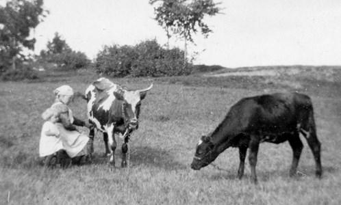 Anna Bengtsson i Timmershult mjölkar kon