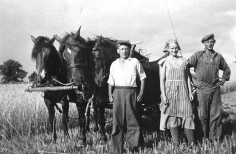 Backagården hästar 91-30.JPG