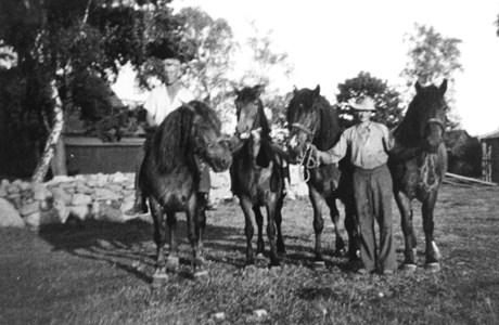 Backagården hästar 91-31.JPG
