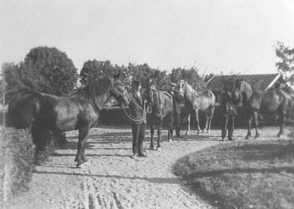 Hästar på Igelösa 1 92-57.JPG
