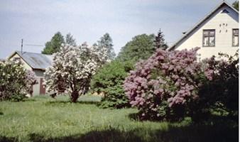 Bror Hjalmar Melker Malm, Eskelhem Tjuls 909 - Hitta