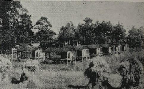 Erikslunds Rävgård, 1949