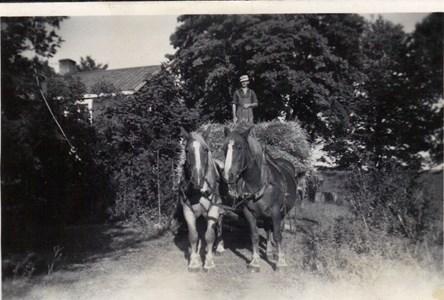 Sörby Thure kör in havre 1947