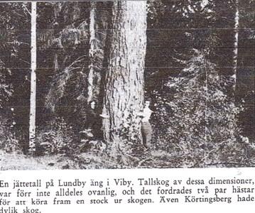Lundby äng.jpg