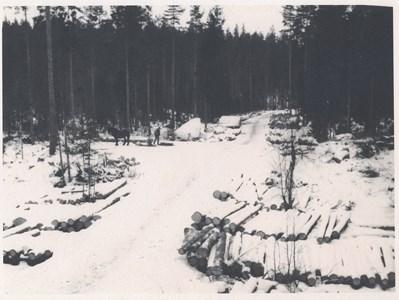 Skogsbruk Odensvi.jpg