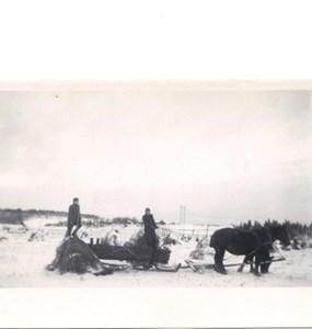 1950-talet.Sörbykärret skörden körs hem