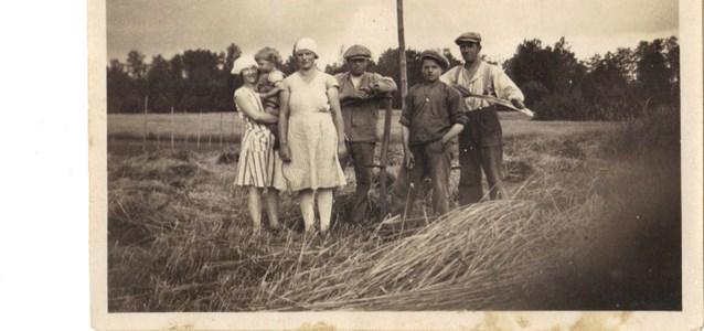 Rågen skördas år 1930