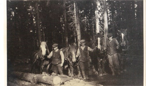 Skogsarbete 1940-talet.jpg